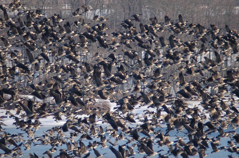 kjøpe canada goose online