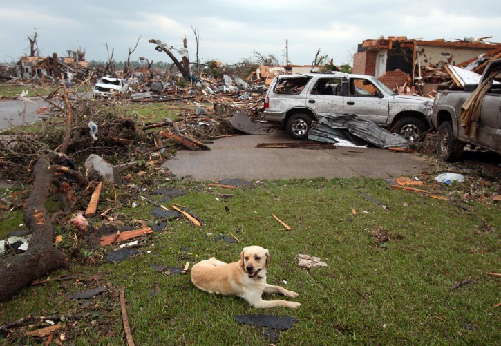 In this Wednesday, April 27, 2011 photo, a displaced dog is seen among debris in Tuscaloosa, Ala. A wave of severe storms laced with tornadoes wreaked havoc in the South on Wednesday AP