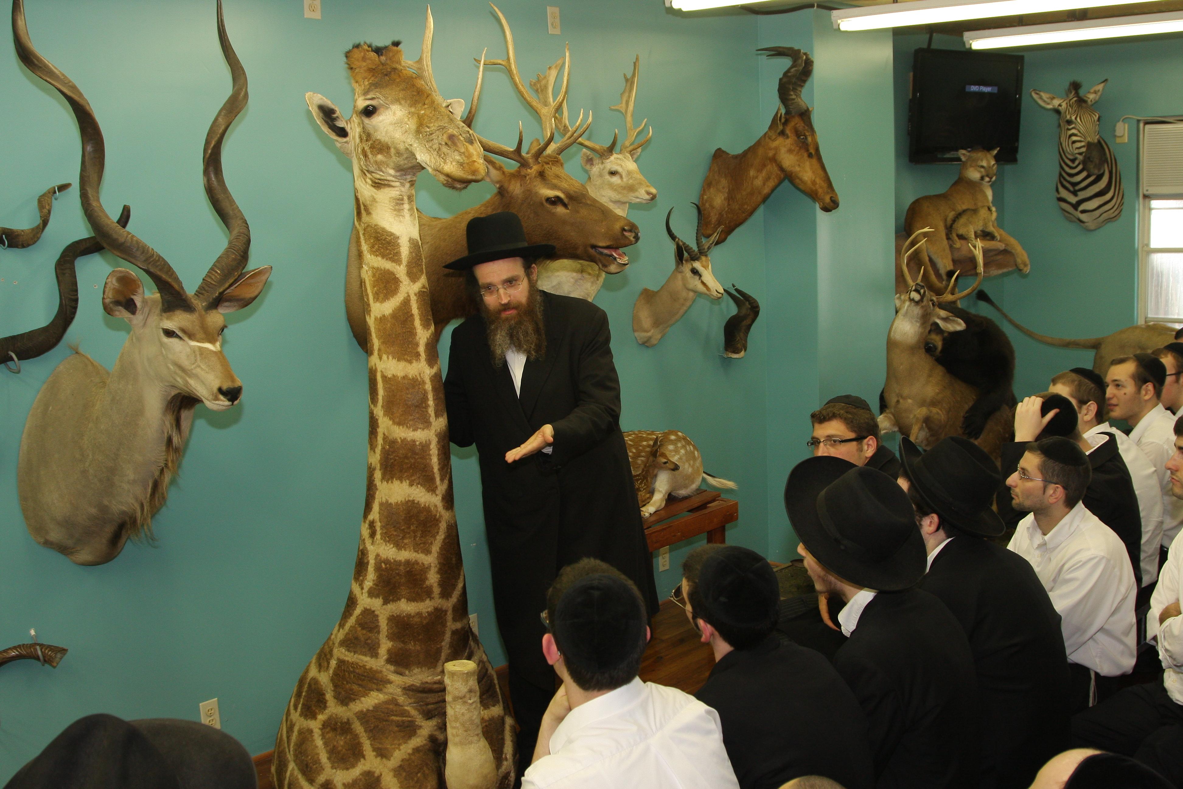Dissertation Torah