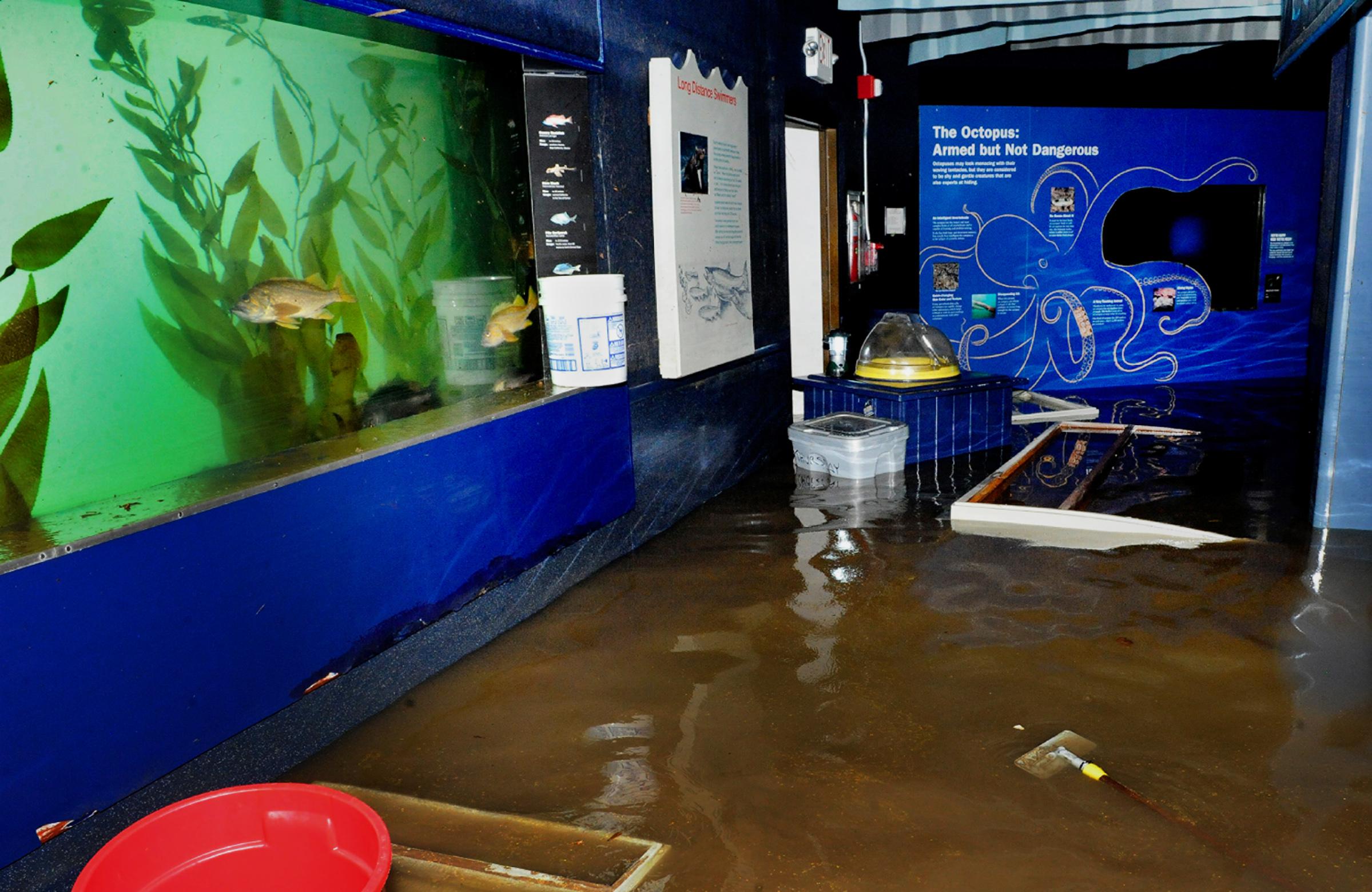 Brooklyn Ny Aquarium Loses Part Of Fish Collection To