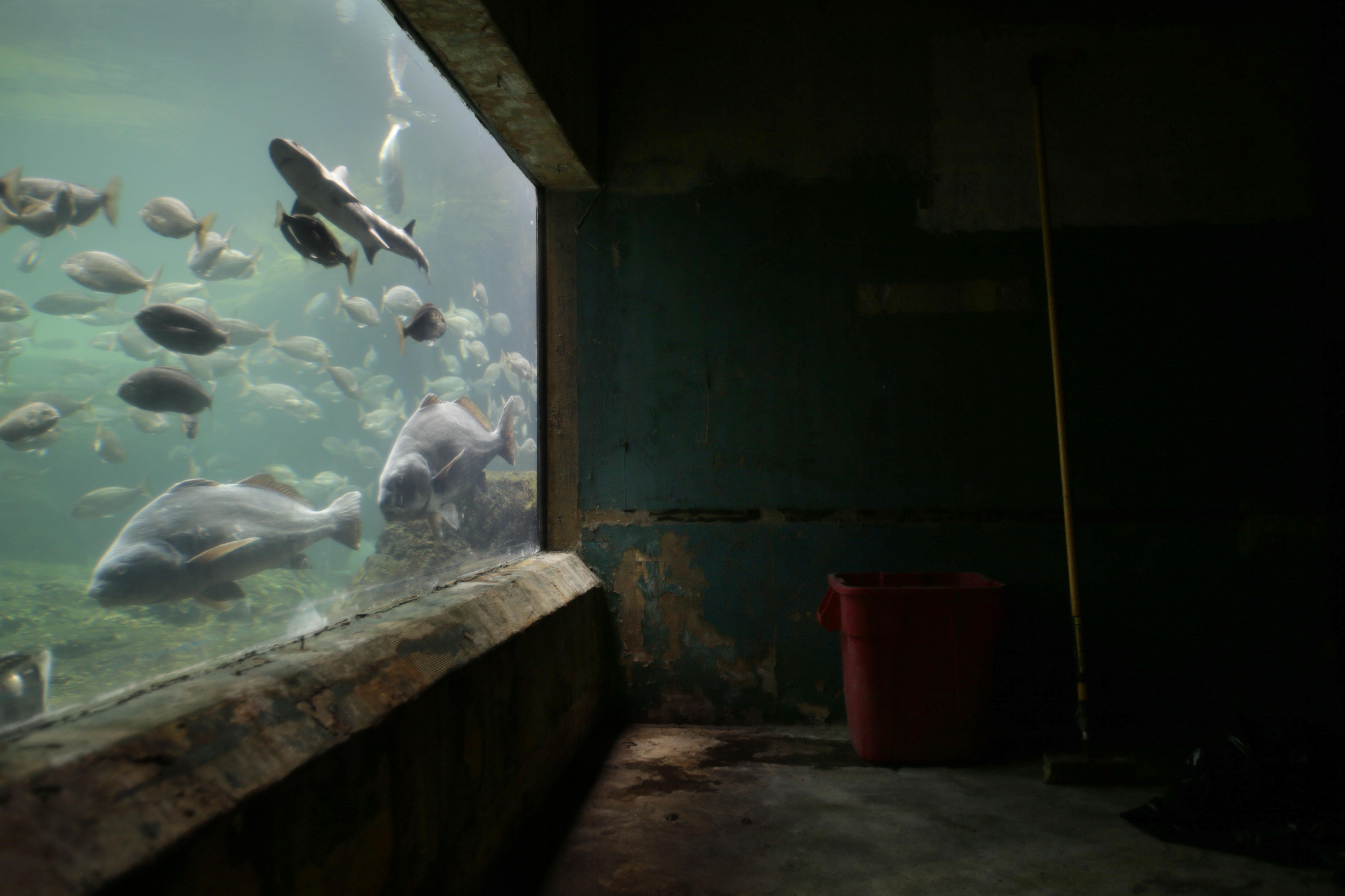 Coney Island Ny Nyc Aquarium Rebounds Rebuilds After Sandy