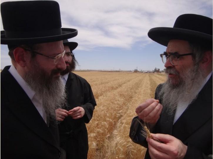 Satmar Rebbe disscusing Halacha of wheat with the Rav Spitzer - Dayan of Skver Shul in Lakewood NJ.