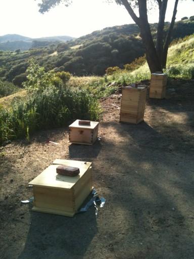 FILE - The Bee Sanctuary at Laio farm