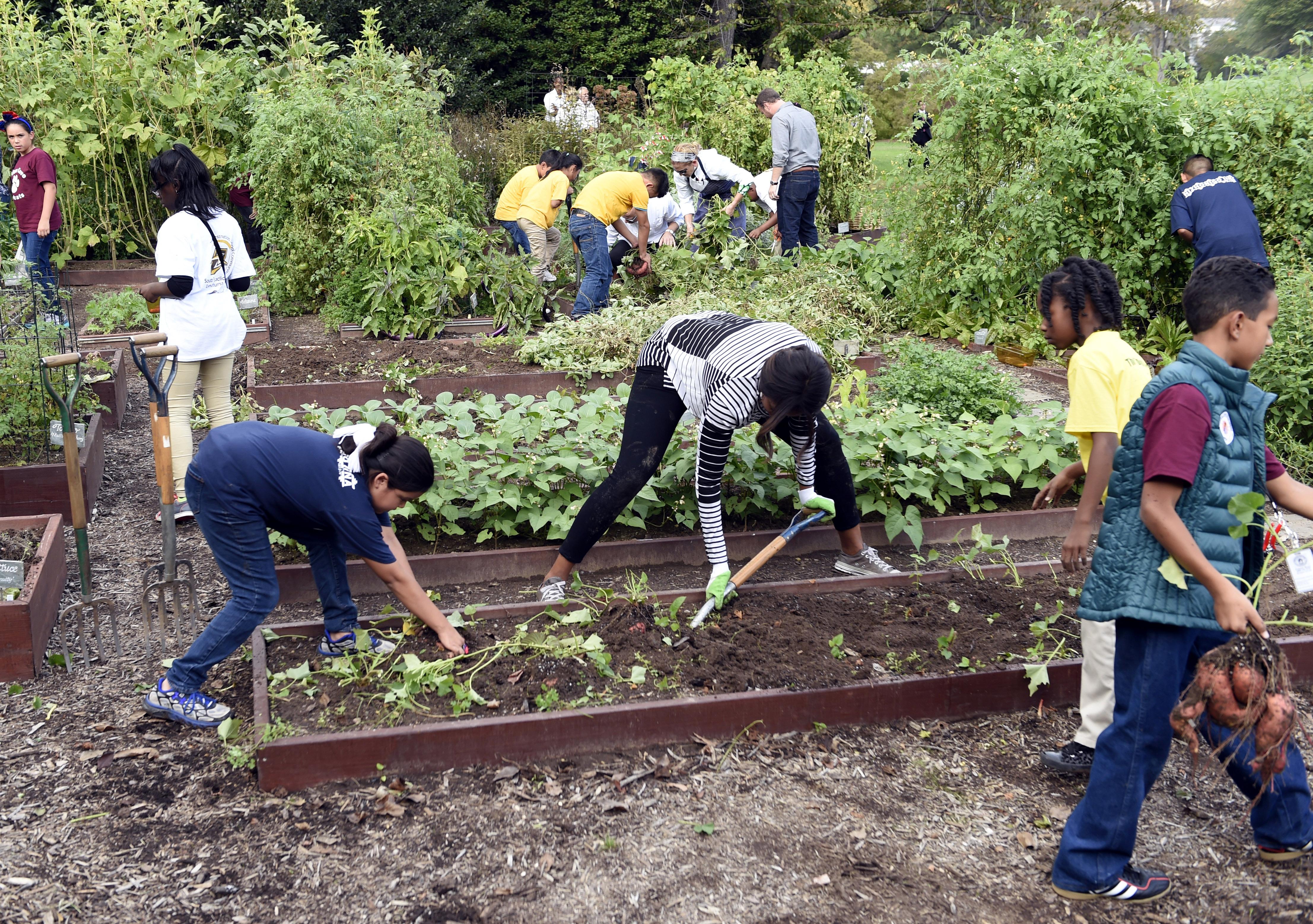 Michelle Obama Kitchen Garden