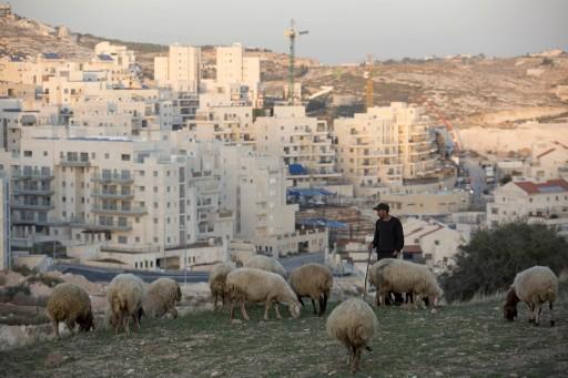A Palestinian shepherd grazes sheep near the East Jerusalem neighborhood called in Hebrew 'Har Homa' and Arabic as 'Jabal abu Ghneim,' East Jerusalem, Israel, 20 November 2014. EPA/ABIR SULTAN