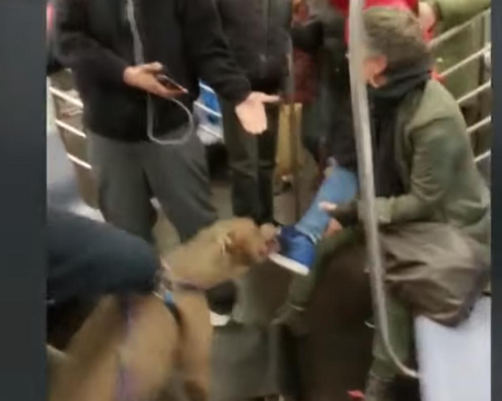 Woman Bites Dog On Subway
